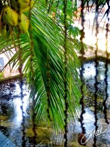 Rainforest Rooftop - Trae Ashlie-Garen - Kovalam, Kerala, India - March 2, 2013